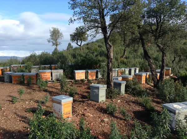 Miel apicultura tradicional Sierra Morena flores silvestres